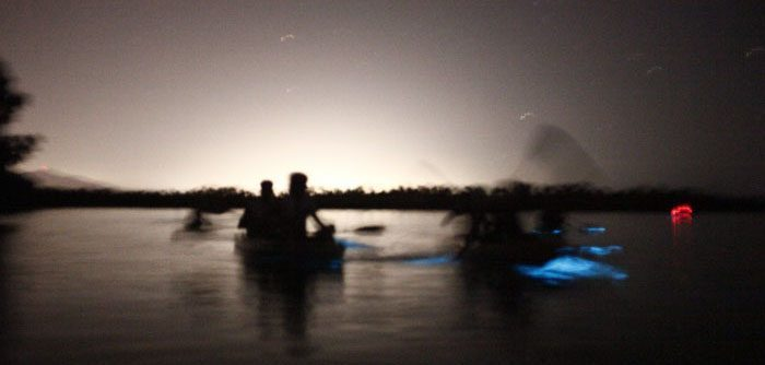 Bioluminescent Bay Kayaking
