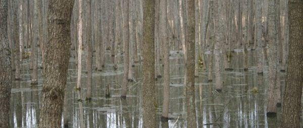 Mazuri Region Forest