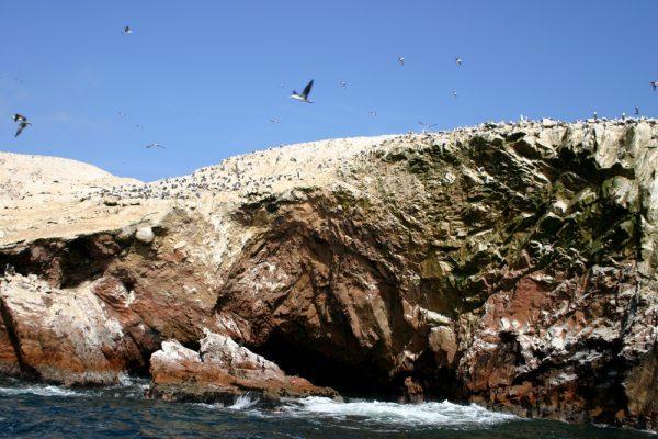 Ballestas Islands, Paracas