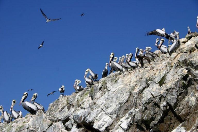 Ballestas Islands Sanctuary