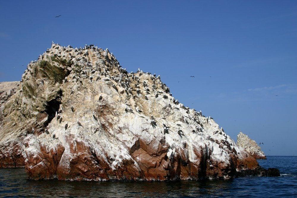 Ballestas Island Sanctuary