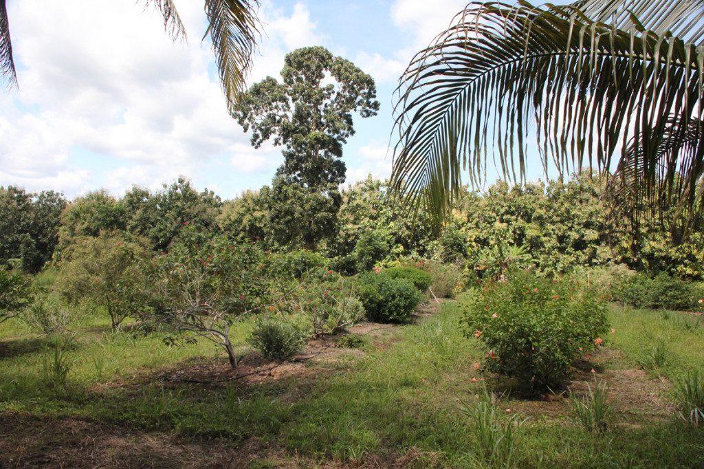 Spice Farm Belize Belize Spice Farm