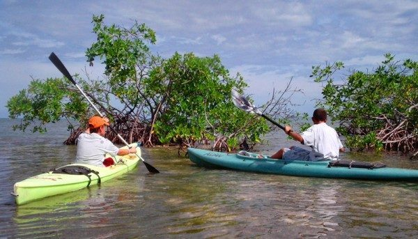 Kayaking in Caye Caulker with Ocean Academy
