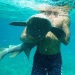 Belize Snapshot: Petting Nurse Sharks