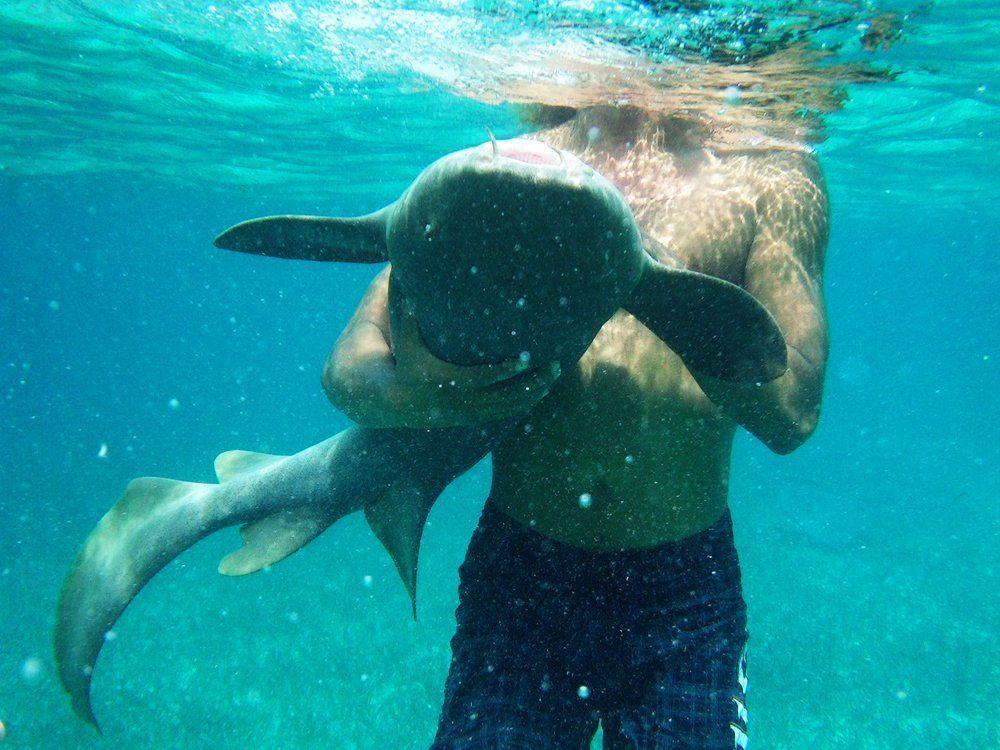 Belize Snapshot: Petting Nurse Sharks on