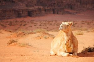 A Day At Wadi Rum