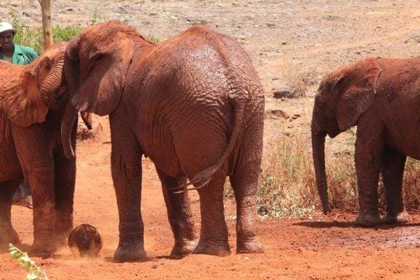 David Shieldrick Elephant Orphanage in Nairobi, Kenya