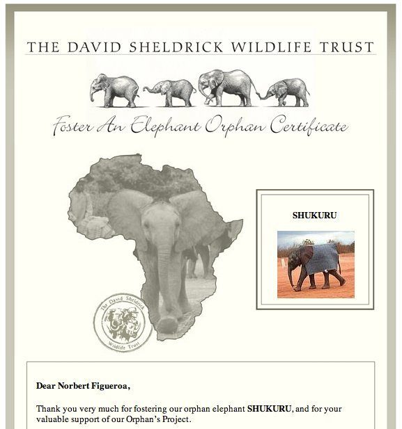 Adoption certificate from David Shieldrick Elephant orphanage