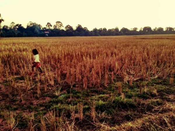 Girl in rice field in Siem Reap, Cambodia