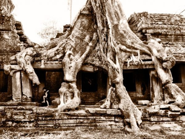 Tree growing out of Ta Prohm