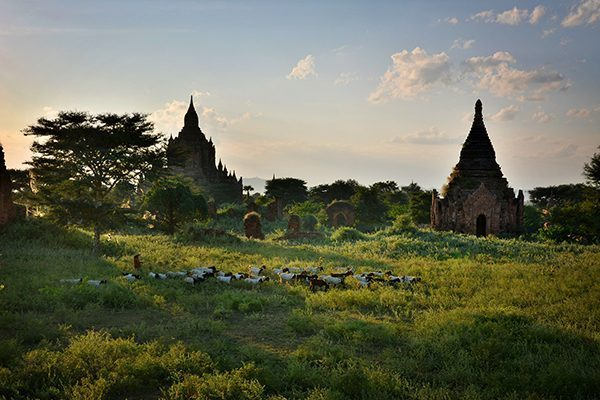 Goatherds by the temples of Bagan, Myanmar