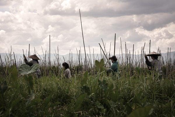 farmers in Inle Lake in Myanmar