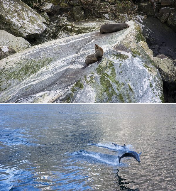 Dolphins and Seals in New Zealand