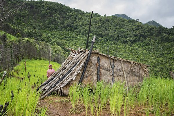 Rice field hut in Thailand
