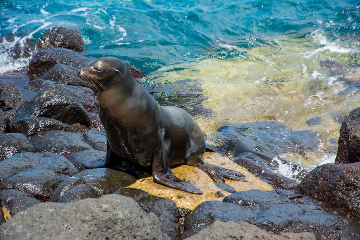 Sea lion on a Galapagos Islands Tours