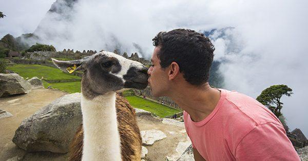 Kissing the llama
