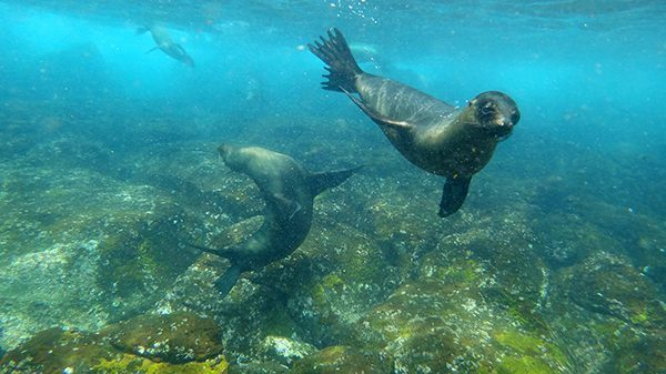Sea Lions in Galapagos, Ecuador