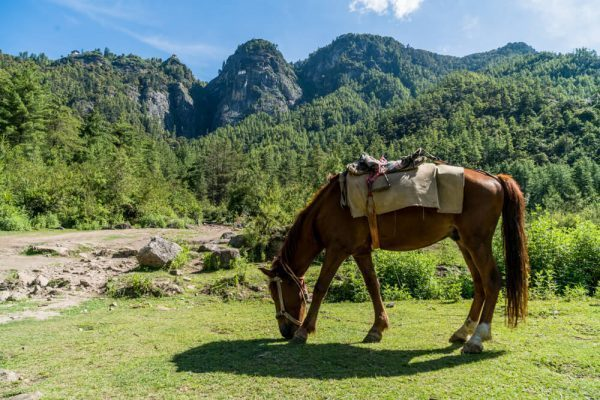 Horse by Tiger's Nest