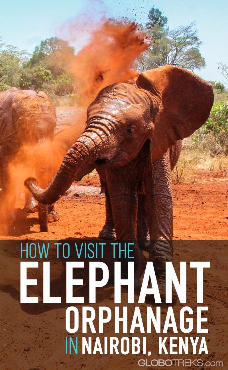 How to Visit the Elephant Orphanage in Nairobi 1
