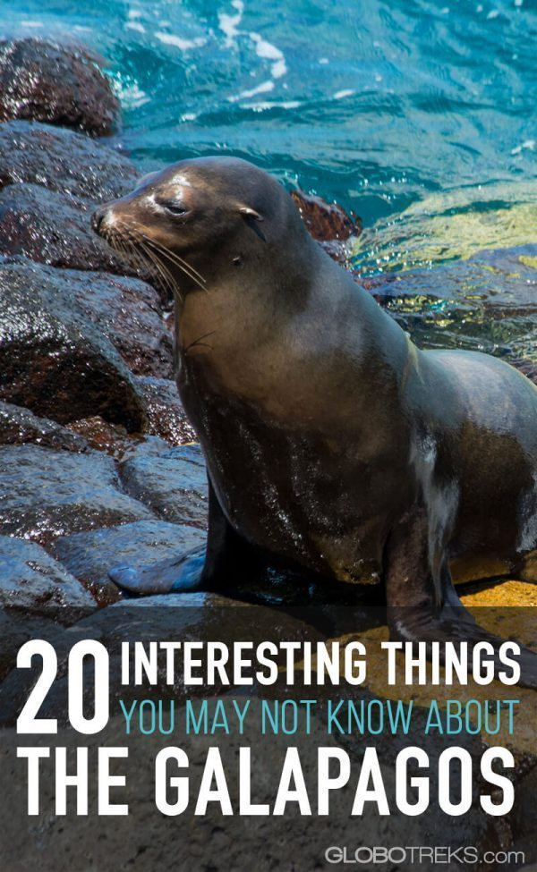 20 Interesting Things You May Not Know About The Galapagos-Pin