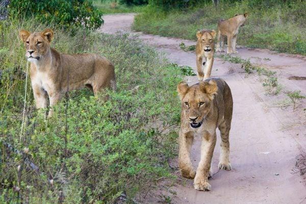Safari at Chobe National Park in Botswana