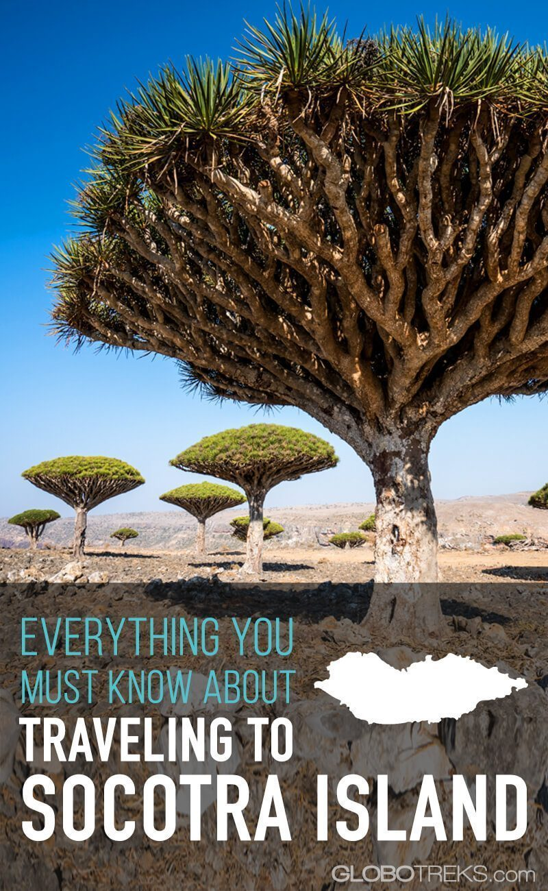 Everything you must know about traveling to Socotra Island
