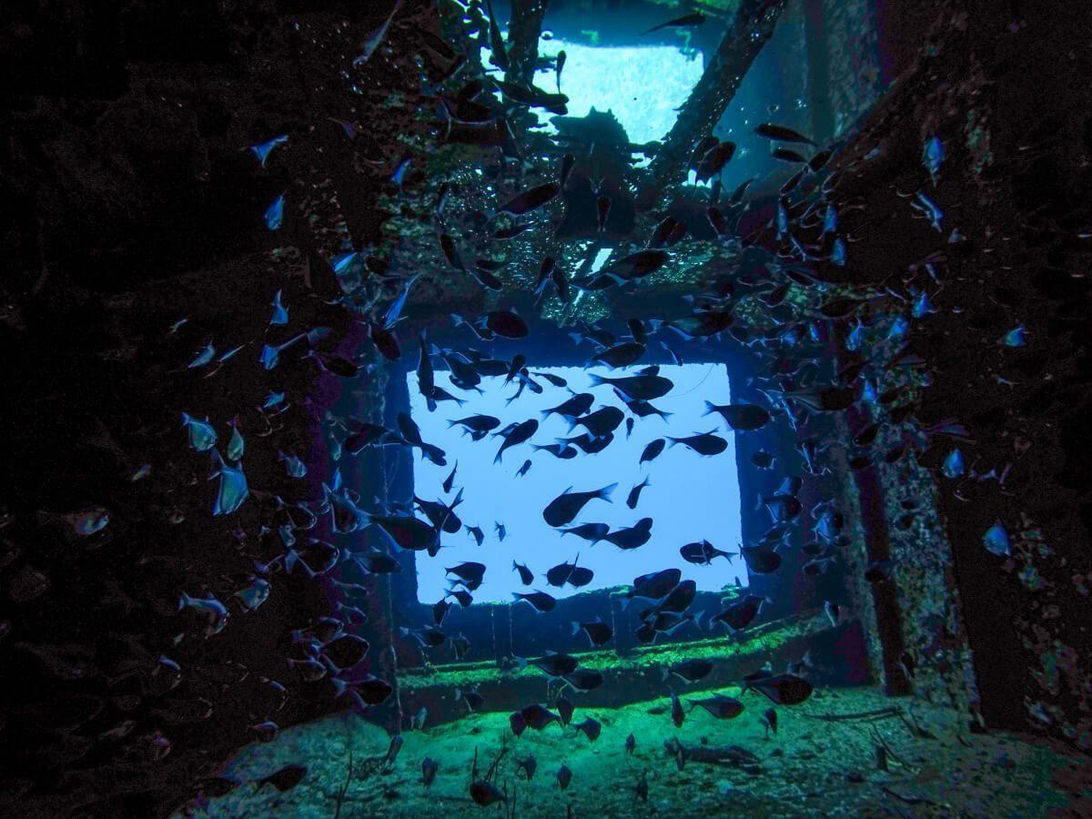 Inside C-53 - Diving in Cozumel