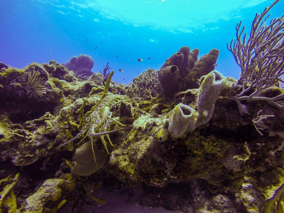 Chaankanaab - Diving in Cozumel