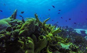 Tormentos - Diving in Cozumel