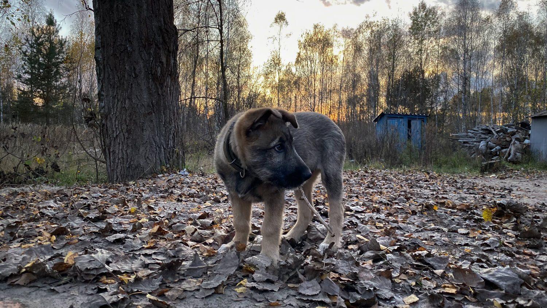 Puppy in Chernobyl