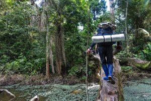 Walking in the Amazon Jungle