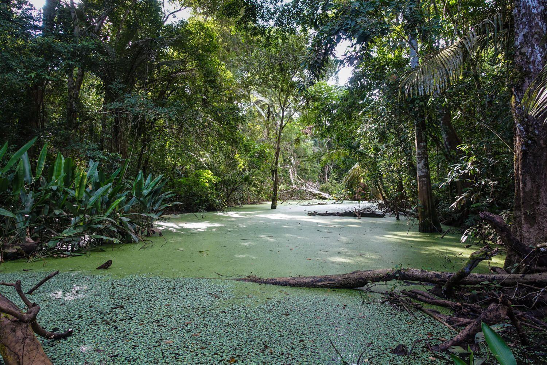 Amazon river in the jungle