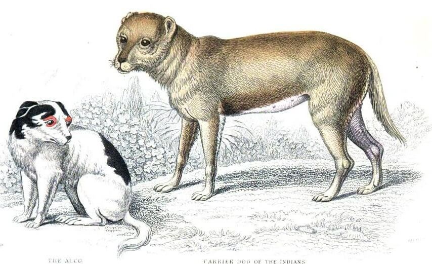 Alco Dog
