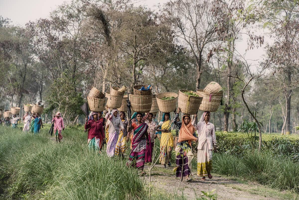 Local culture in India