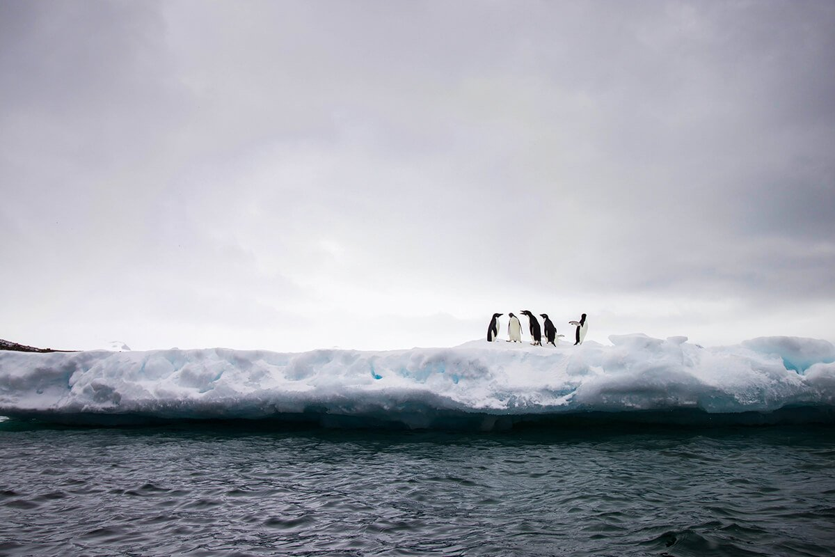 Penguins on the ice in Antarctica