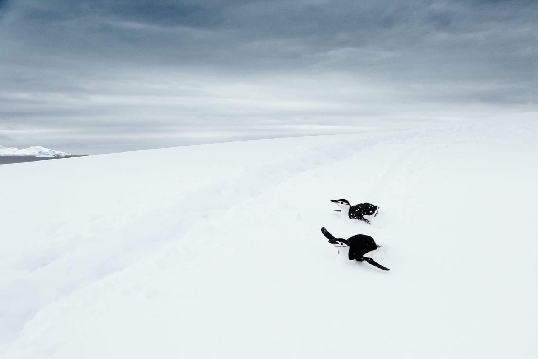 Sliding penguins in Antarctica