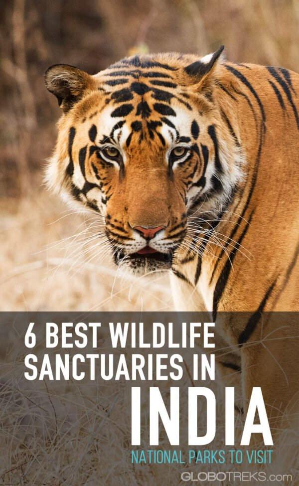 6 Best Wildlife Sanctuaries in India | National Parks to Visit