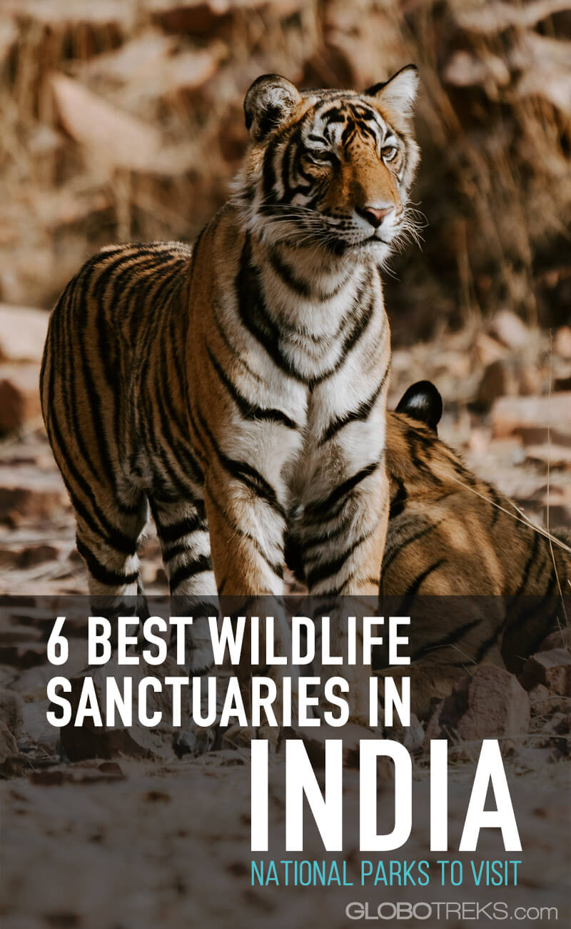 6 Best Wildlife Sanctuaries in India - Top National Parks to Visit