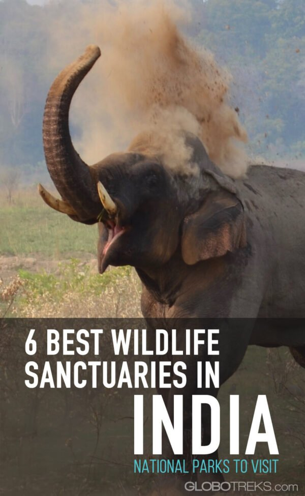 Best Wildlife Sanctuaries in India: National Parks to Visit