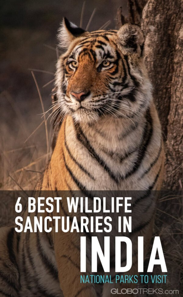 6 Best Wildlife Sanctuaries in India: National Parks to Visit