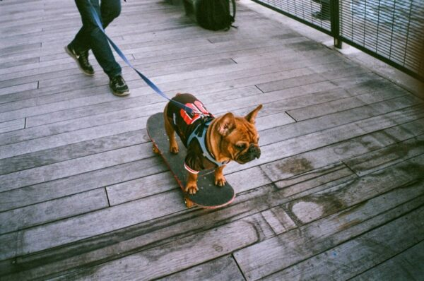How I Used House Sitting/Pet Sitting As A Way To Save Money In NYC 1