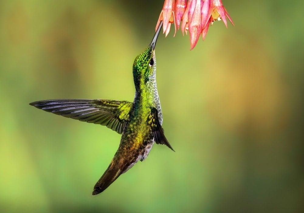 Birds in Ecuador